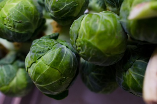 brussel sprouts_3146