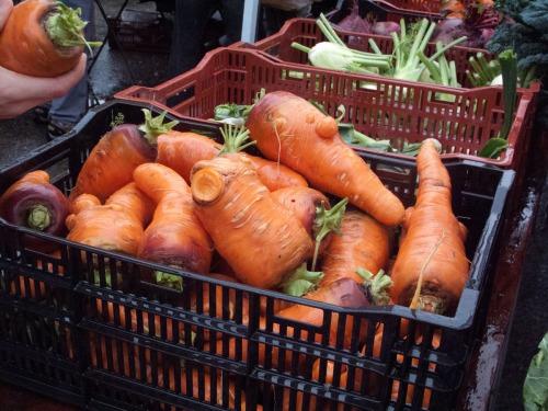 fall carrots_2777