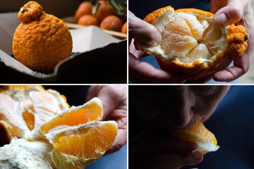 sumo oranges