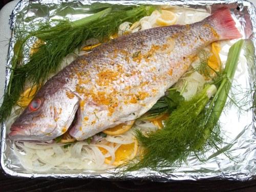 Fish_1679