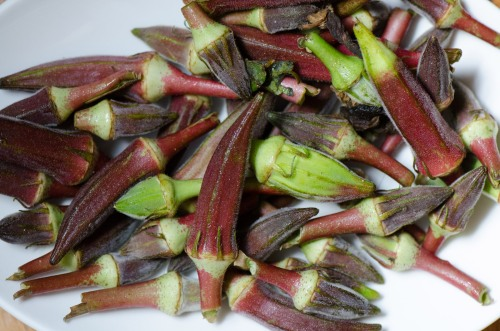 20130712_Okra_purple_DSC_0975
