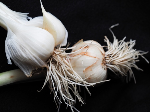 Garlic fresh_P6288157
