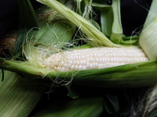 Corn_p6288175