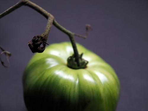 GreenTomato