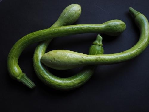 tromboncino-squash
